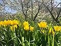 Huerta de Primavera.jpg