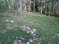 Hummelmoraberget, klapperstensvallar, 2015g.jpg