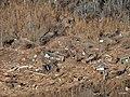 Hurricane Sandy debris at Edwin B. Forsythe Refuge (8185357797).jpg