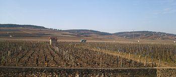 IMG Vignoble de Beaune.JPG