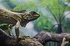 Iguana en el parque de Jaraguá.jpg