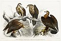 Illustration from A History of the Earth and Animated Nature by Oliver Goldsmith from rawpixel's own original edition of the publication 00052.jpg