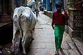 India DSC01225 (16721349141).jpg
