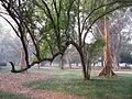 Indian Botanic Garden - Howrah 2012-01-29 1644.JPG