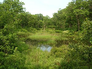 Interdunal wetland - An interdunal wetland in wooded dunes, at Miller Woods in the Indiana Dunes National Lakeshore.