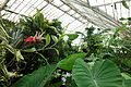 Interior view - Conservatory of Flowers - San Francisco, CA - DSC03089.JPG