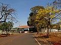 Ipê amarelo (Tabebuia serratifolia) na entrada da Estação Experimental do Instituto Agronômico de Campinas - IAC em Ribeirão Preto (atual Centro de Cana IAC-APTA). O local é ao lado da exposição Agri - panoramio.jpg