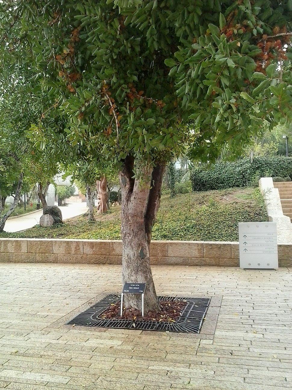 Irena sendler tree