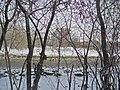 Irkutsk. Akademgorodok. February 2013 - panoramio (109).jpg