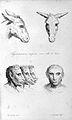J.C. Lavater, L'Art de connaitre les hommes... Wellcome L0025295.jpg
