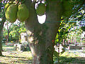 Jackfrucht Dili.jpg