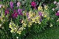 Jardin Massey de Tarbes au printemps (08).jpg