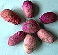 Java plum (Syzygium cumini) seeds.jpg