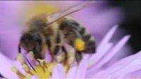 File:Jesenske čebele - Autumn Bees.webm