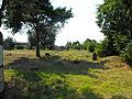 Jewish cemeteries in Pastavy 1p.jpg