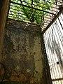 Joseph island cell liana.jpg