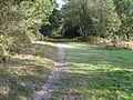 Junction of two paths on Access land adjacent to the A22 - geograph.org.uk - 1535538.jpg