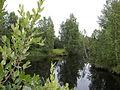 Kågeälven nerströms sett från bron ovanför Lillsjöns utlopp i älven.jpg