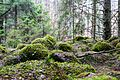 Kaltenes kalvas 2010-4.jpg