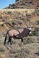 Karoo National Park 2014 07.jpg