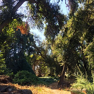 History of Visalia, California - The Kaweah Oaks preserve, just east of Visalia.