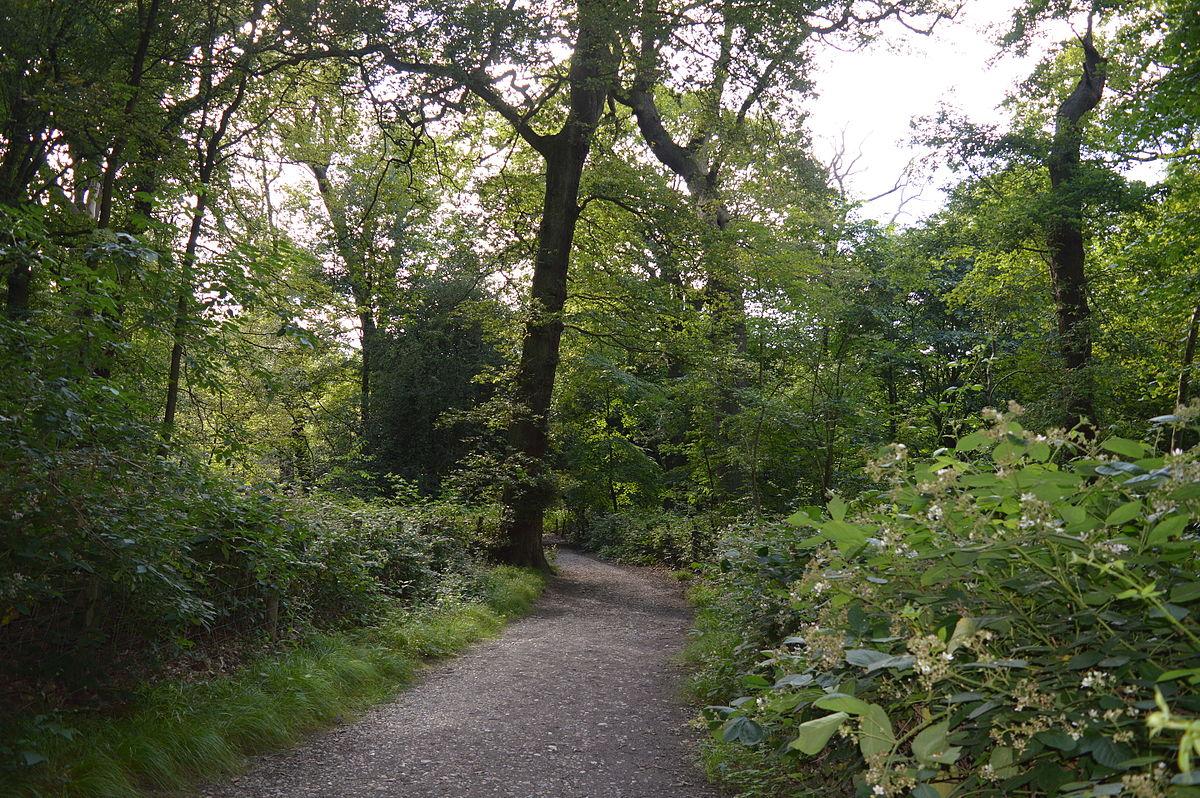 Hampstead Heath Woods - Wikipedia