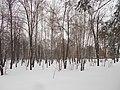 Khimselyshche, Cherkasy, Cherkas'ka oblast, Ukraine - panoramio (310).jpg