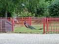 Kinderboerderij De Trotse Pauw (5) - pauw.jpg
