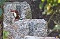 Kingfisher (59235240).jpeg
