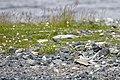 Kirkenes 2013 06 10 2093 (10412814313).jpg