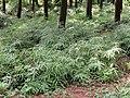 Kunming Botanical Garden - DSC02737.JPG