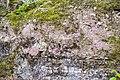 Lügde - 2015-05-29 - LIP-064 (08).jpg