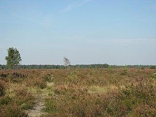 Lüneburg Heath Landscape, area of heath, geest and woodland in Lower Saxony, Germany
