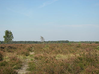 Lüneburg Heath - A typical view of Lüneburg Heath near Schneverdingen