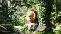 File:La lassitude du lion.webm