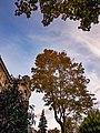 La rue Bartholdi à Colmar en automne.jpg