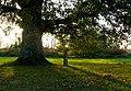 Lady Biggs Tree, Lydlinch, Dorset - geograph.org.uk - 1018876.jpg