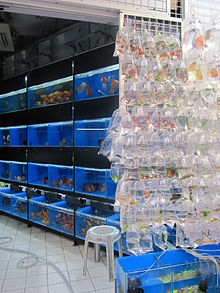 Aquariophilie wikip dia for Vente aquariophilie