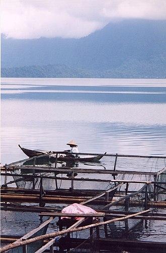 Lake Maninjau - Fisherman on Lake Maninjau