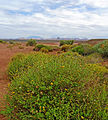 Lake Powell, Desert Flowers, AZ 9-15 (21842092036).jpg