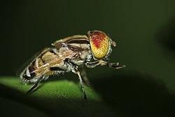 76 Gambar Bagan Daur Hidup Hewan Lalat Gratis