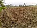 Land prepared for potato crops - Shah Baig Qila.jpg