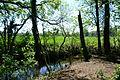 Landschaftsschutzgebiet Gütersloh - Isselhorst - An der Lutter (24).jpg