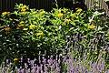 Lavendelbeet im Innenhof 11.jpg