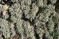 Lichen (3865700908).jpg