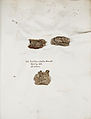 Lichenes Helvetici IX X 1833 008.jpg