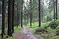 Liebesbankweg - panoramio (7).jpg