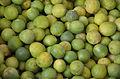 Limes-Oman.jpg
