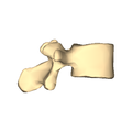 Lumber vertebra 3 close-up lateral surface.png