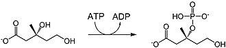 Mevalonate pathway - Image: M3kwiki 3